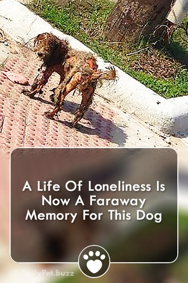 A Life Of Loneliness Is Now A Faraway Memory For This Dog