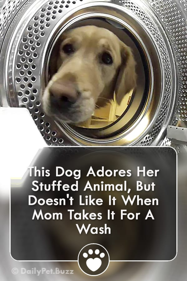 This Dog Adores Her Stuffed Animal, But Doesn\'t Like It When Mom Takes It For A Wash