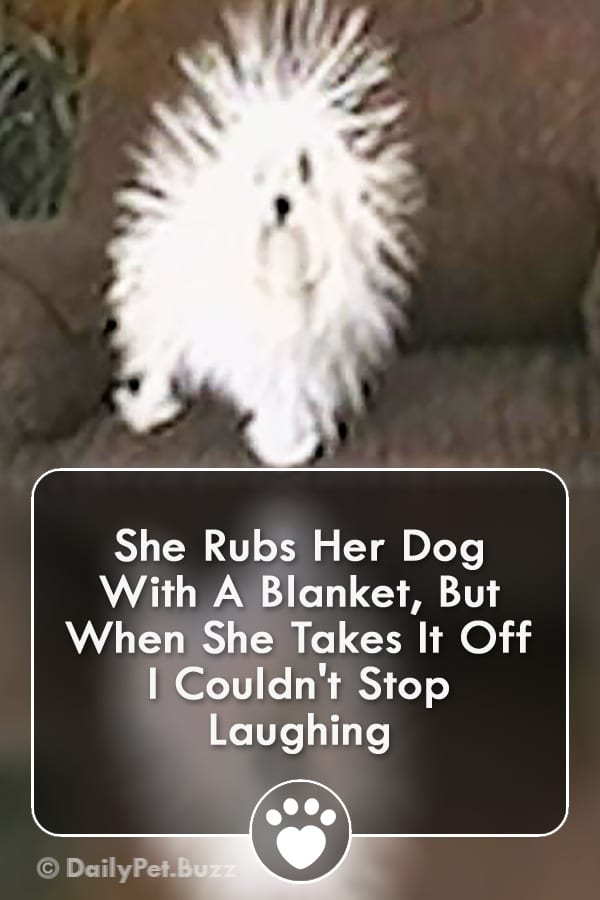 She Rubs Her Dog With A Blanket, But When She Takes It Off I Couldn\'t Stop Laughing