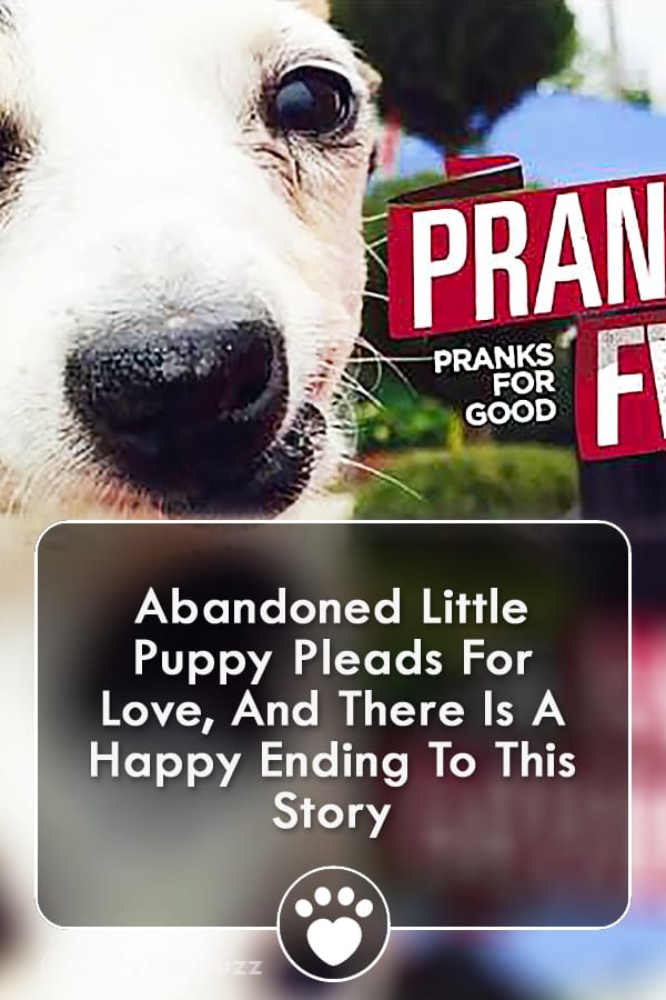 Abandoned Little Puppy Pleads For Love, And There Is A Happy Ending To This Story