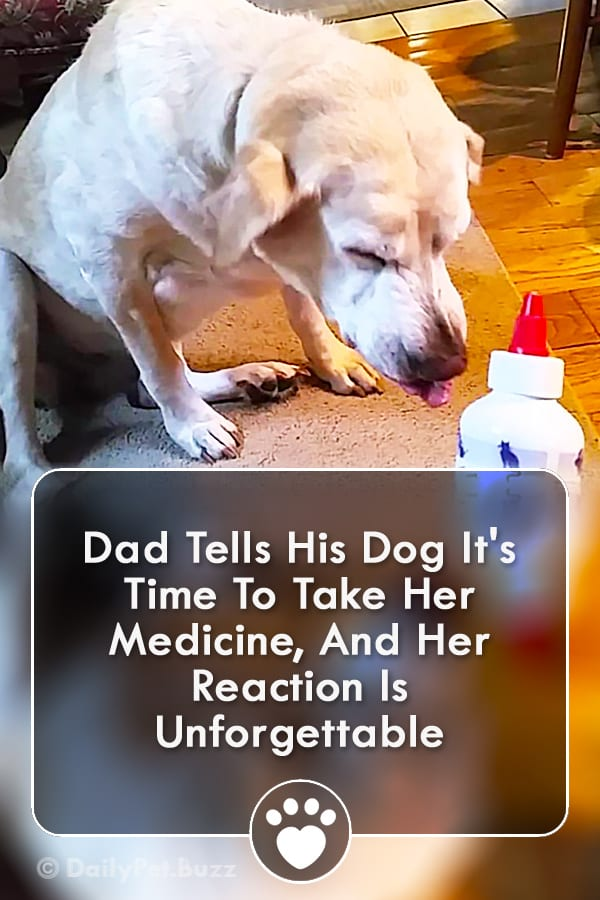 Dad Tells His Dog It\'s Time To Take Her Medicine, And Her Reaction Is Unforgettable