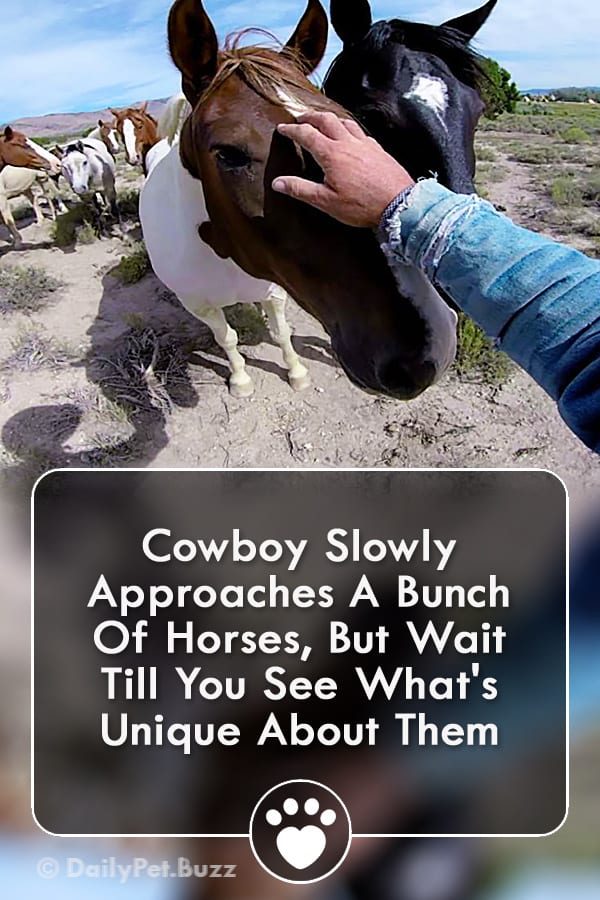Cowboy Slowly Approaches A Bunch Of Horses, But Wait Till You See What\'s Unique About Them