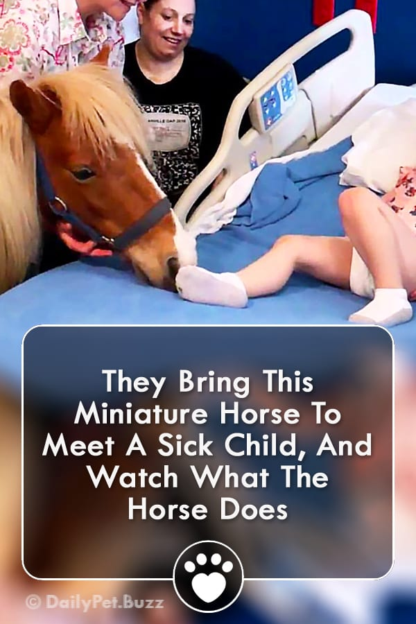 They Bring This Miniature Horse To Meet A Sick Child, And Watch What The Horse Does