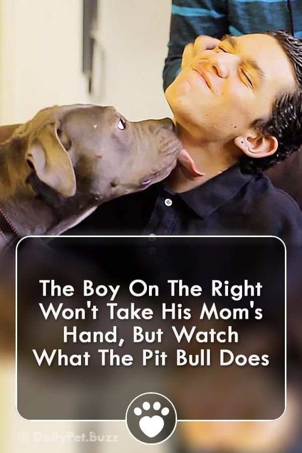 The Boy On The Right Won\'t Take His Mom\'s Hand, But Watch What The Pit Bull Does