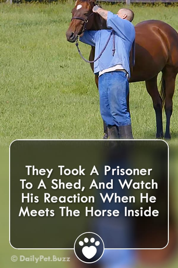 They Took A Prisoner To A Shed, And Watch His Reaction When He Meets The Horse Inside