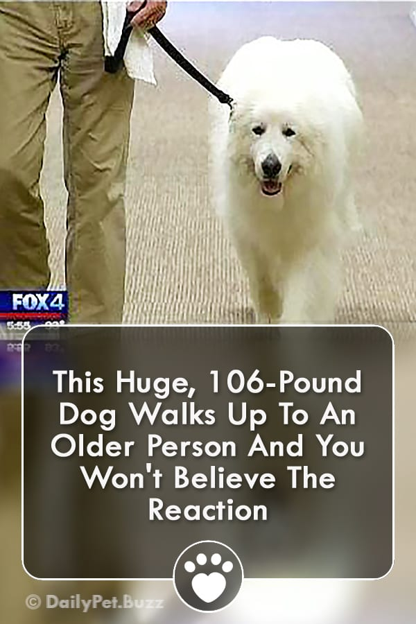 This Huge, 106-Pound Dog Walks Up To An Older Person And You Won\'t Believe The Reaction