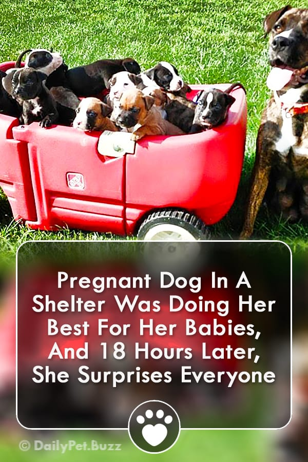 Pregnant Dog In A Shelter Was Doing Her Best For Her Babies, And 18 Hours Later, She Surprises Everyone