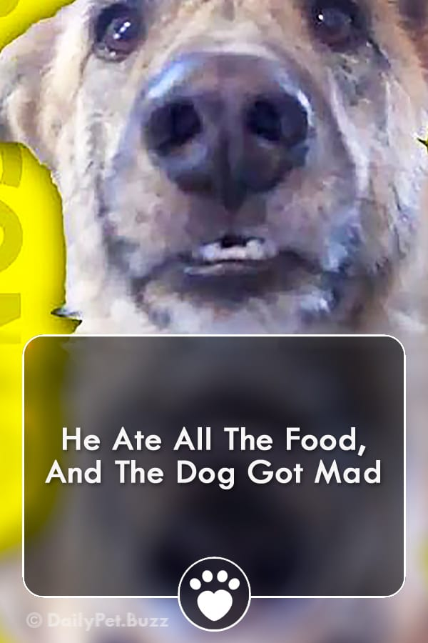 He Ate All The Food, And The Dog Got Mad