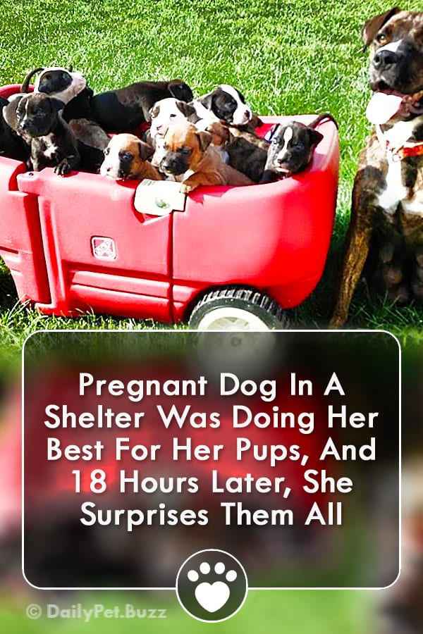 Pregnant Dog In A Shelter Was Doing Her Best For Her Pups, And 18 Hours Later, She Surprises Them All