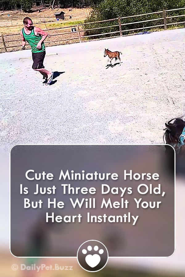 Cute Miniature Horse Is Just Three Days Old, But He Will Melt Your Heart Instantly