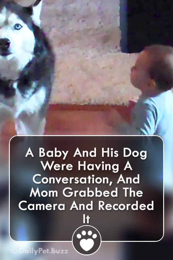 A Baby And His Dog Were Having A Conversation, And Mom Grabbed The Camera And Recorded It