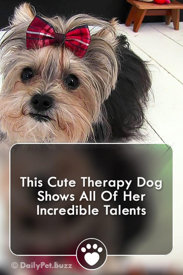 This Cute Therapy Dog Shows All Of Her Incredible Talents