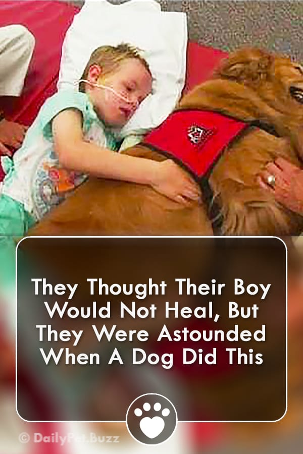 They Thought Their Boy Would Not Heal, But They Were Astounded When A Dog Did This