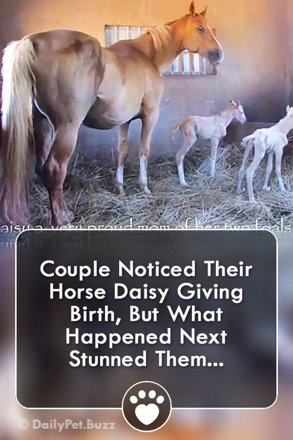Couple Noticed Their Horse Daisy Giving Birth, But What Happened Next Stunned Them...