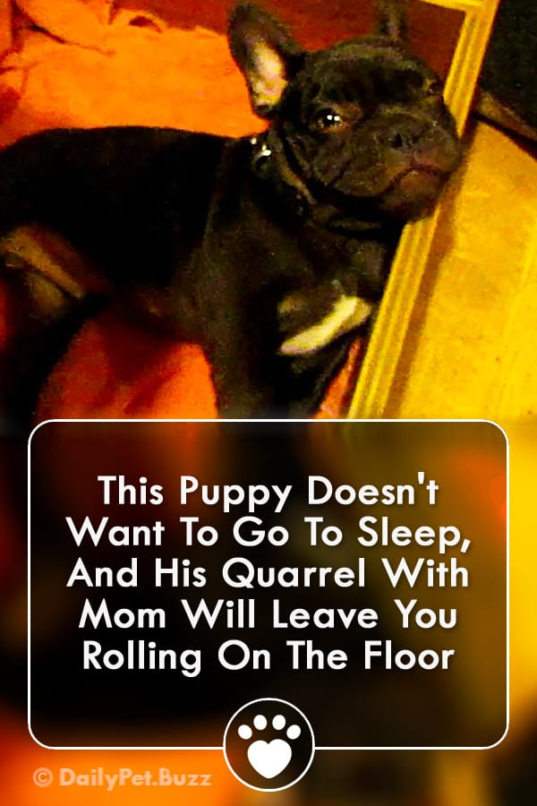 This Puppy Doesn\'t Want To Go To Sleep, And His Quarrel With Mom Will Leave You Rolling On The Floor
