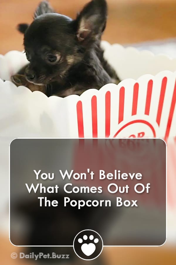 You Won\'t Believe What Comes Out Of The Popcorn Box