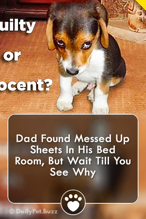 Dad Found Messed Up Sheets In His Bed Room, But Wait Till You See Why