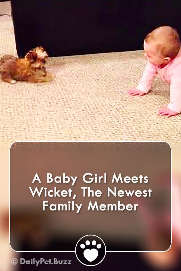 A Baby Girl Meets Wicket, The Newest Family Member
