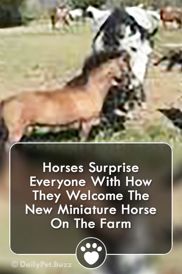 Horses Surprise Everyone With How They Welcome The New Miniature Horse On The Farm