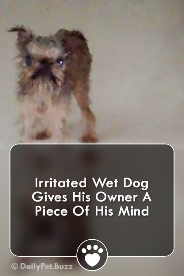 Irritated Wet Dog Gives His Owner A Piece Of His Mind