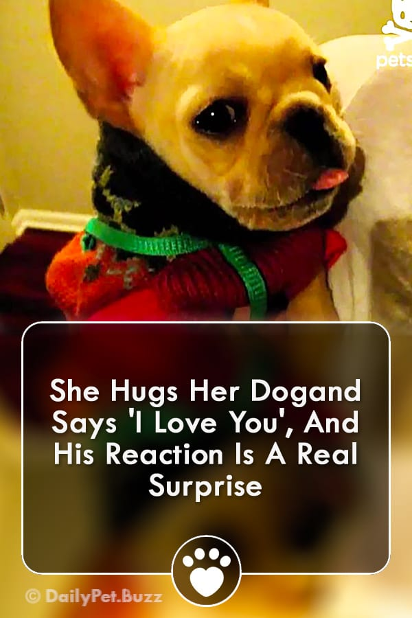She Hugs Her Dogand Says \'I Love You\', And His Reaction Is A Real Surprise