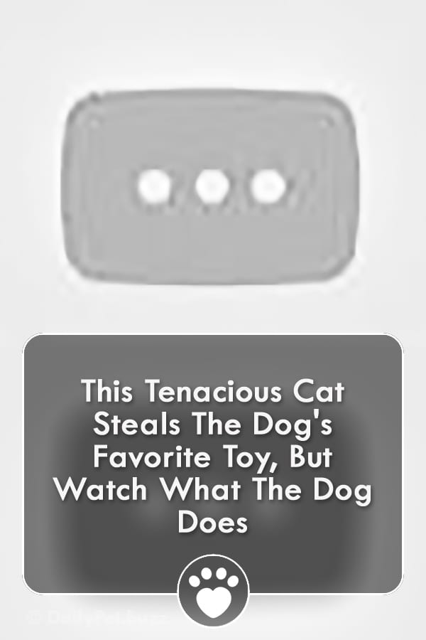 This Tenacious Cat Steals The Dog\'s Favorite Toy, But Watch What The Dog Does
