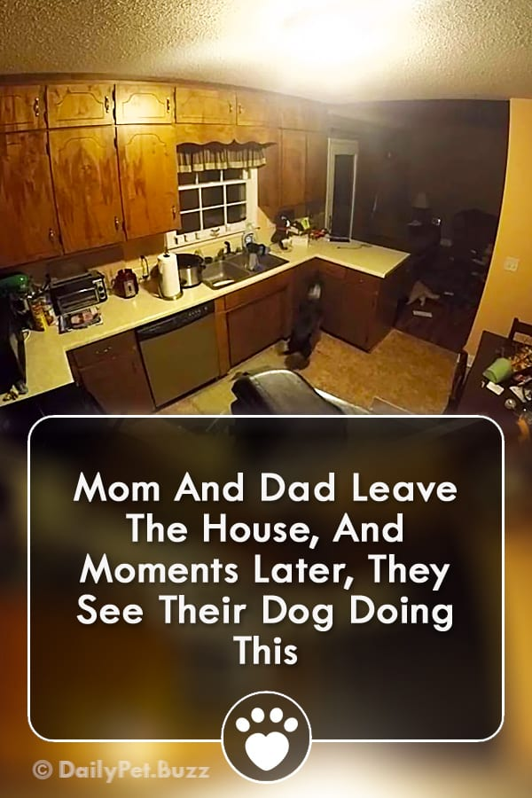 Mom And Dad Leave The House, And Moments Later, They See Their Dog Doing This