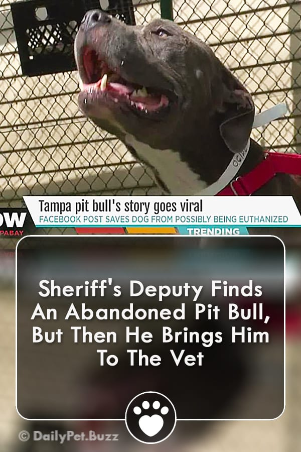 Sheriff\'s Deputy Finds An Abandoned Pit Bull, But Then He Brings Him To The Vet
