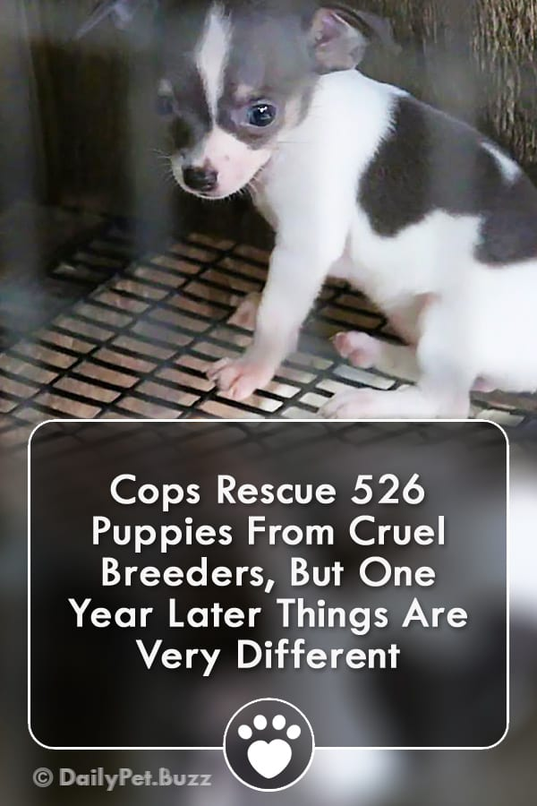 Cops Rescue 526 Puppies From Cruel Breeders, But One Year Later Things Are Very Different