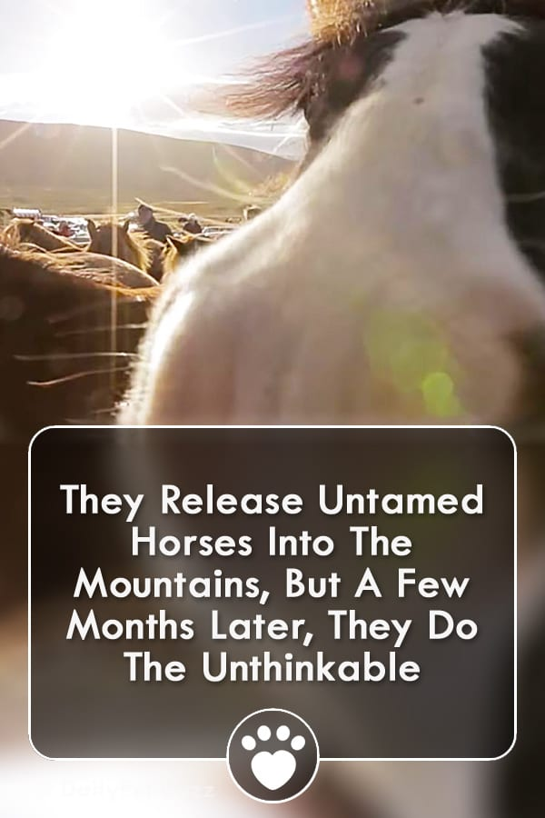 They Release Untamed Horses Into The Mountains, But A Few Months Later, They Do The Unthinkable