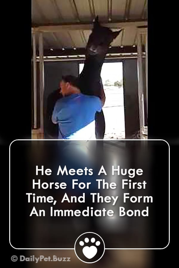 He Meets A Huge Horse For The First Time, And They Form An Immediate Bond