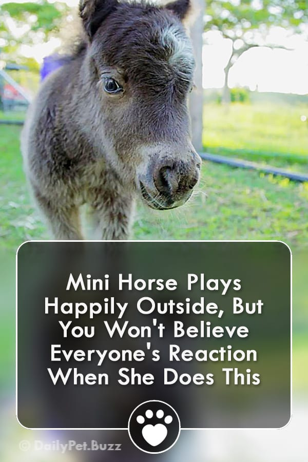 Mini Horse Plays Happily Outside, But You Won\'t Believe Everyone\'s Reaction When She Does This