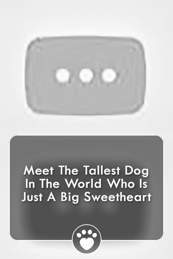 Meet The Tallest Dog In The World Who Is Just A Big Sweetheart
