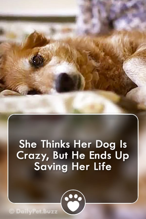 She Thinks Her Dog Is Crazy, But He Ends Up Saving Her Life