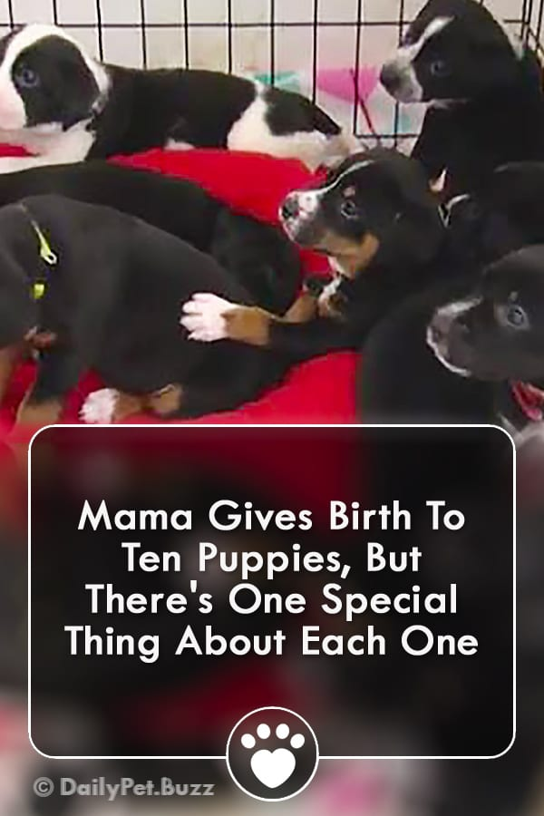 Mama Gives Birth To Ten Puppies, But There\'s One Special Thing About Each One