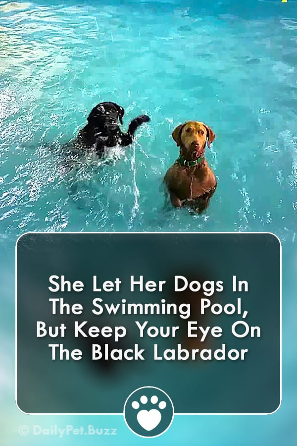 She Let Her Dogs In The Swimming Pool, But Keep Your Eye On The Black Labrador