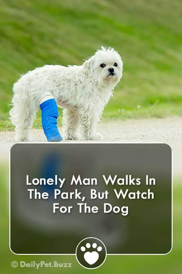 Lonely Man Walks In The Park, But Watch For The Dog