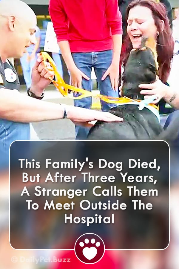 This Family\'s Dog Died, But After Three Years, A Stranger Calls Them To Meet Outside The Hospital