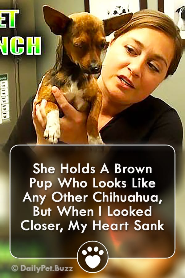She Holds A Brown Pup Who Looks Like Any Other Chihuahua, But When I Looked Closer, My Heart Sank