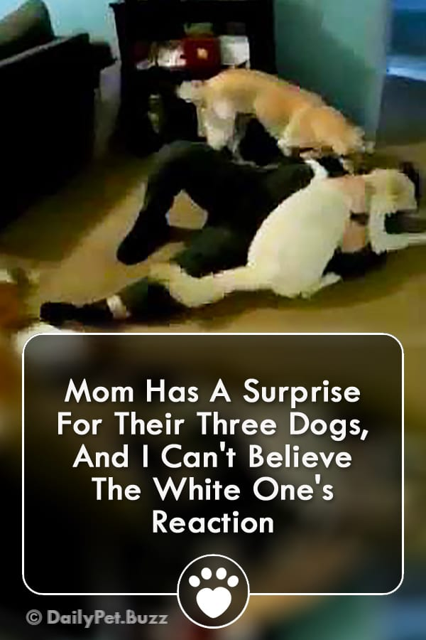 Mom Has A Surprise For Their Three Dogs, And I Can\'t Believe The White One\'s Reaction