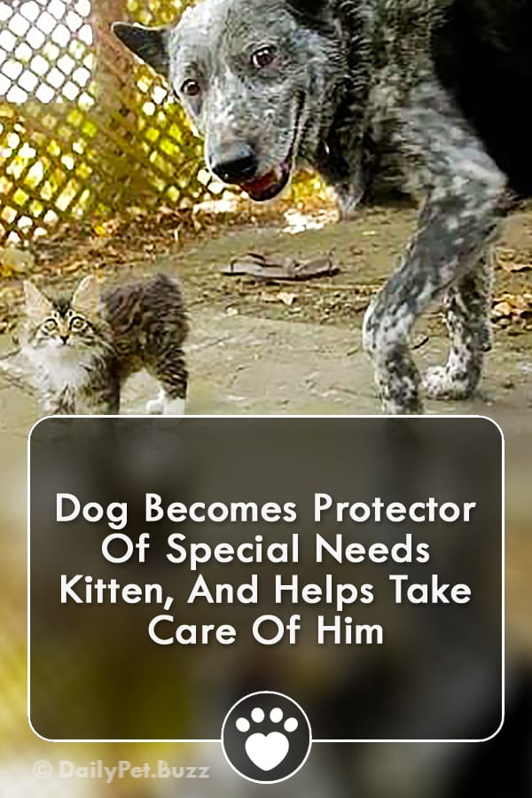 Dog Becomes Protector Of Special Needs Kitten, And Helps Take Care Of Him