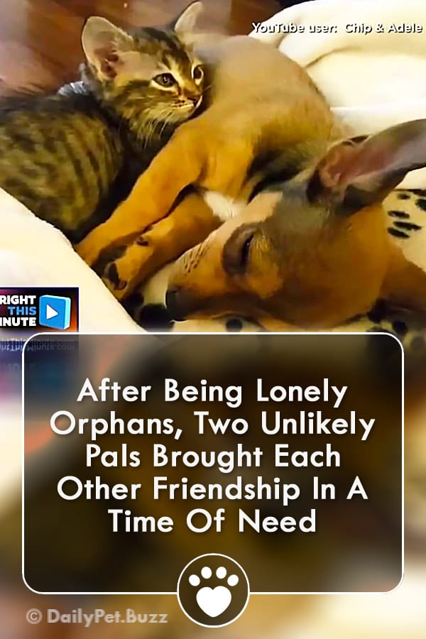 After Being Lonely Orphans, Two Unlikely Pals Brought Each Other Friendship In A Time Of Need