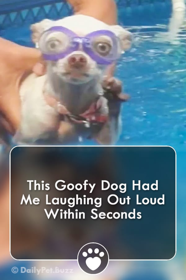 This Goofy Dog Had Me Laughing Out Loud Within Seconds