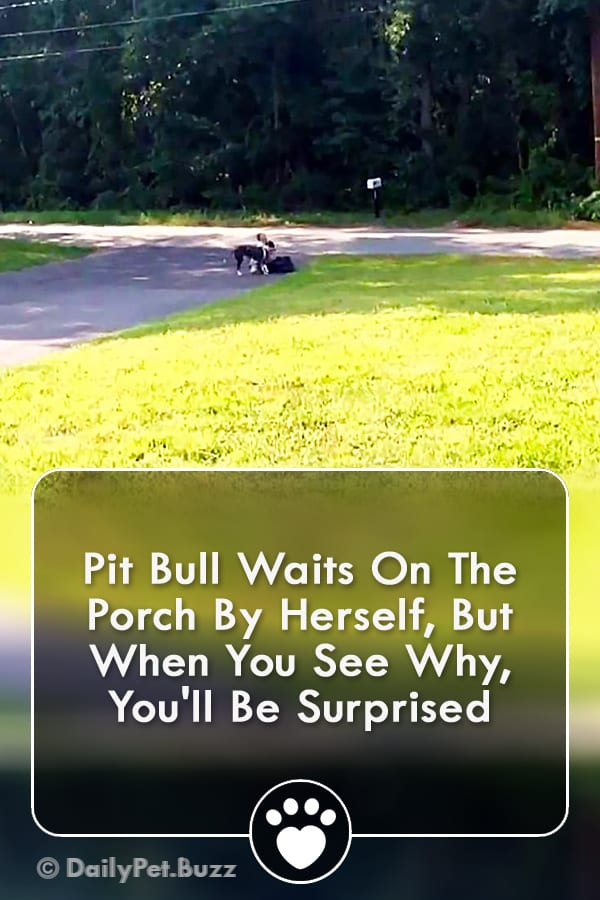 Pit Bull Waits On The Porch By Herself, But When You See Why, You\'ll Be Surprised