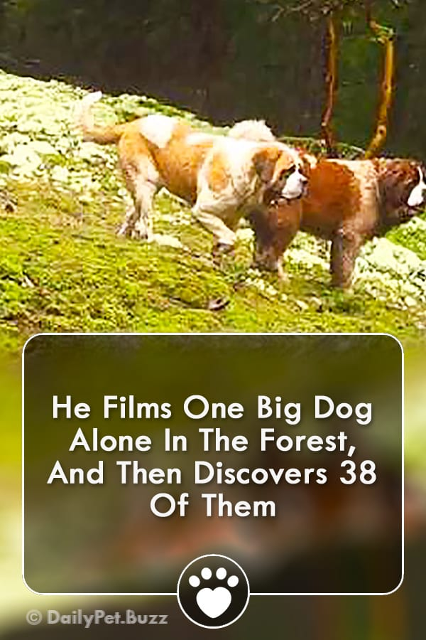 He Films One Big Dog Alone In The Forest, And Then Discovers 38 Of Them