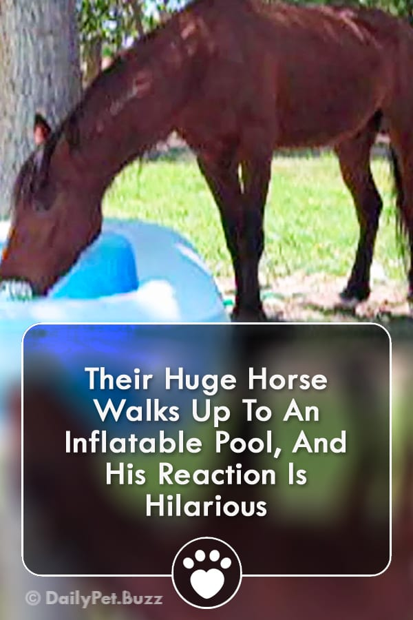 Their Huge Horse Walks Up To An Inflatable Pool, And His Reaction Is Hilarious