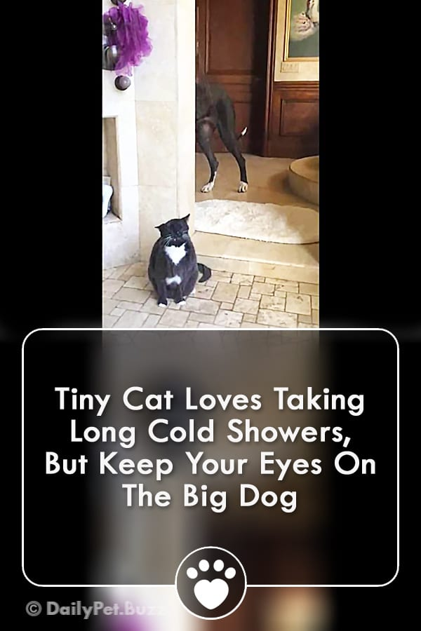 Tiny Cat Loves Taking Long Cold Showers, But Keep Your Eyes On The Big Dog