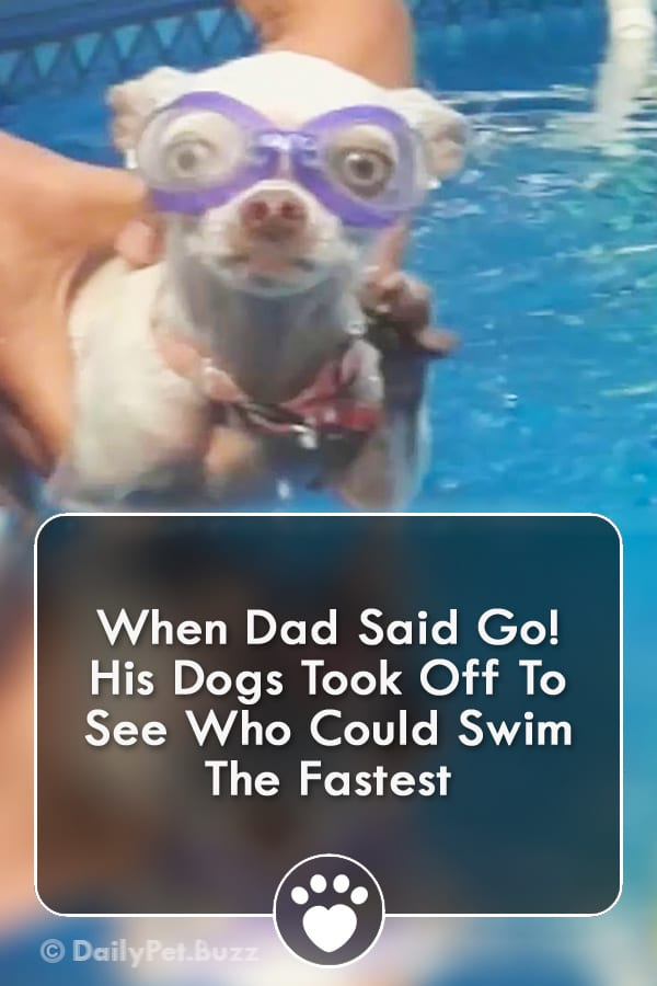 When Dad Said Go! His Dogs Took Off To See Who Could Swim The Fastest