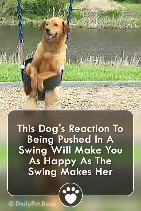 This Dog\'s Reaction To Being Pushed In A Swing Will Make You As Happy As The Swing Makes Her