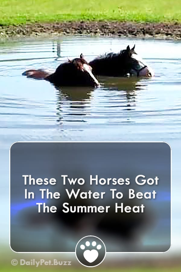 These Two Horses Got In The Water To Beat The Summer Heat